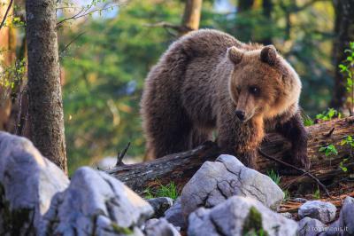 Outdoor Reporters nel regno dell'orso bruno
