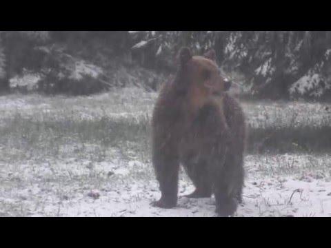 Outdoor Reporters: sulle tracce degli orsi nelle foreste della Slovenia